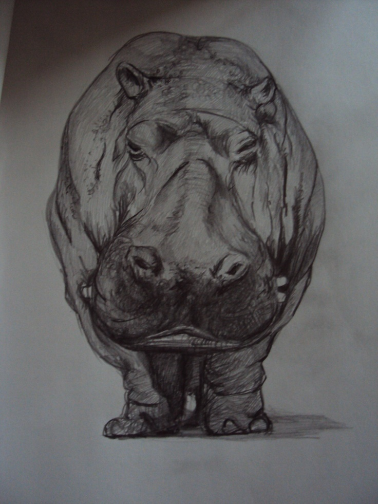 hippo drawing by Justina Budd