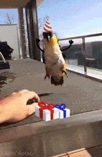 Sempre Cantei Errado: 16 gifs de aves com bracinhos que são a nova paixão da internet