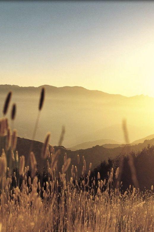 Nature Country Orange IPhone Wallpaper