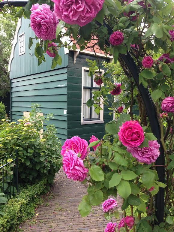 Zaandijk, Ολλανδία ~ Ιούνιος 2015
