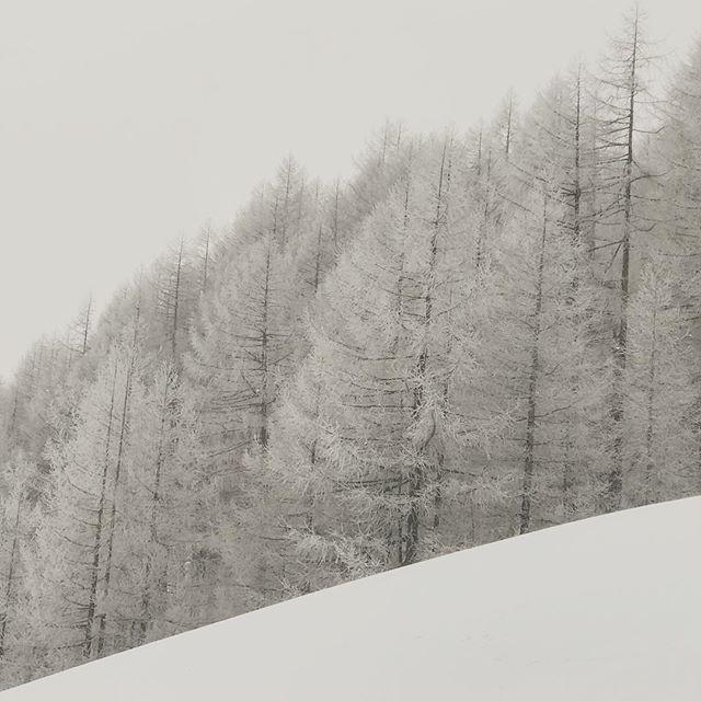 #winterwonderland in @soelden.official have fun skiing  #soelden #sölden #skiing #skiholidays #nature #winter #tree #snowcover #oetztal