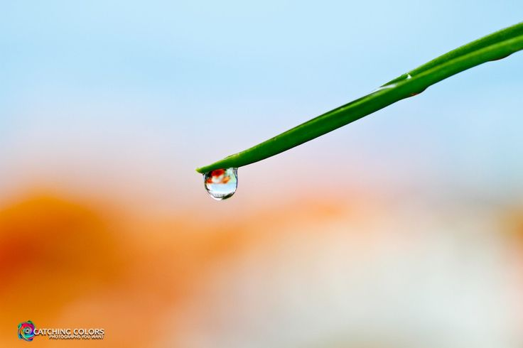 Droplet and flowers