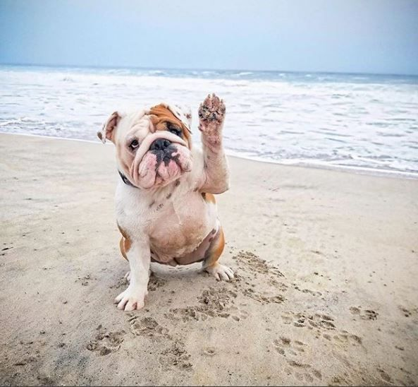 Raise Your Hand If You Re Ready For A Myrtle Beach Vacation Photo