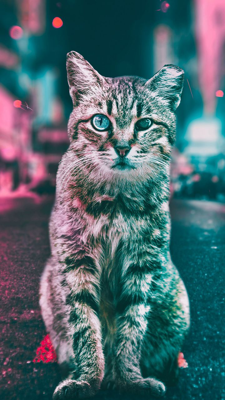 curious cat, stare, animal, 720x1280 wallpaper | animals wallpapers