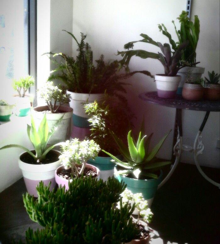 Plants loving the sun...