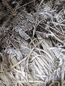 Fern Frost, photographic print by Mei Lim, Guild member, graphic artist and professional photographer