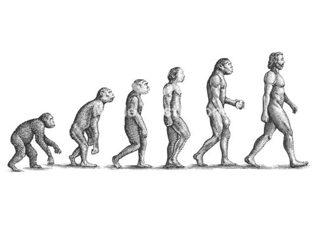 human evolution illustration - Google 검색 - for adulting book cover; edit to baby to adult stages, with different images of growing up, i.e. kid stuff bottle, toys, to cap/gown, electronics, etc - in illustration style chosen (not as pictured here)