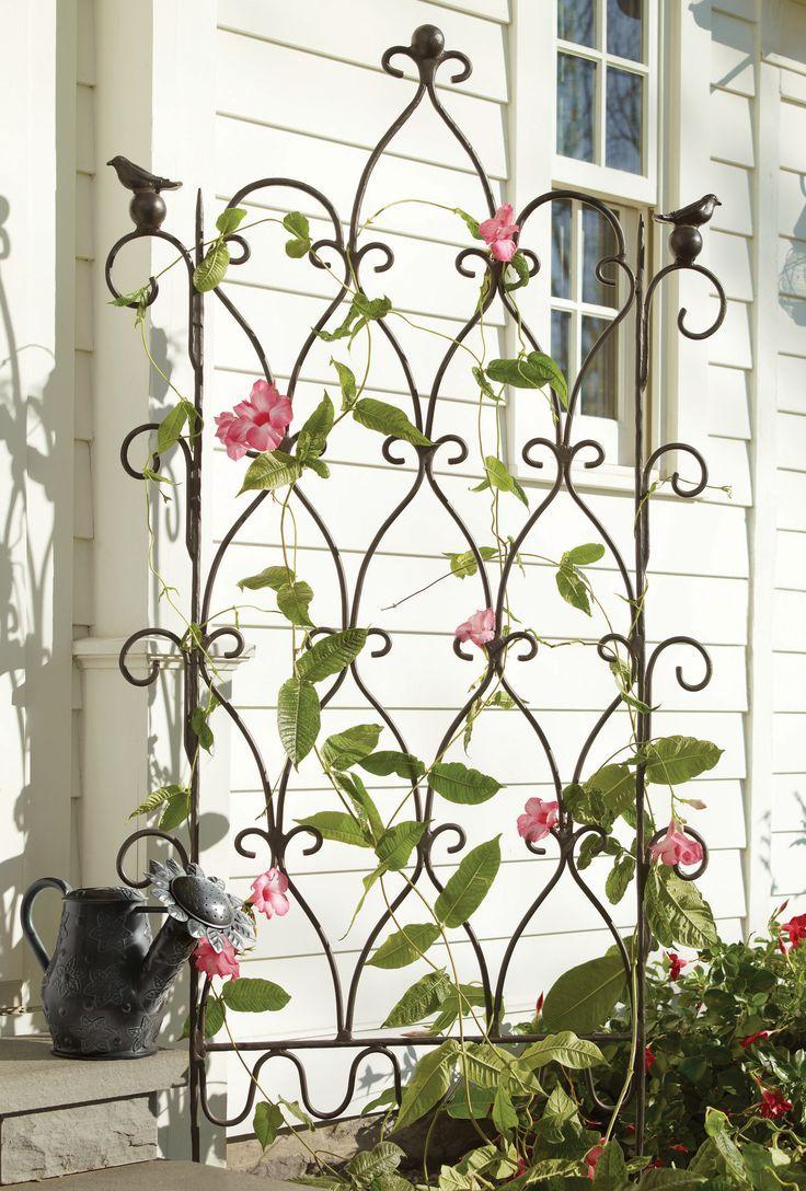 Pretty Garden Trellis Wrought Iron Trellis Iron Trellis Garden
