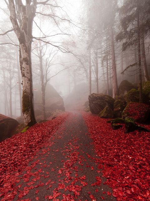 Autumn path, Lombardy, Italy
