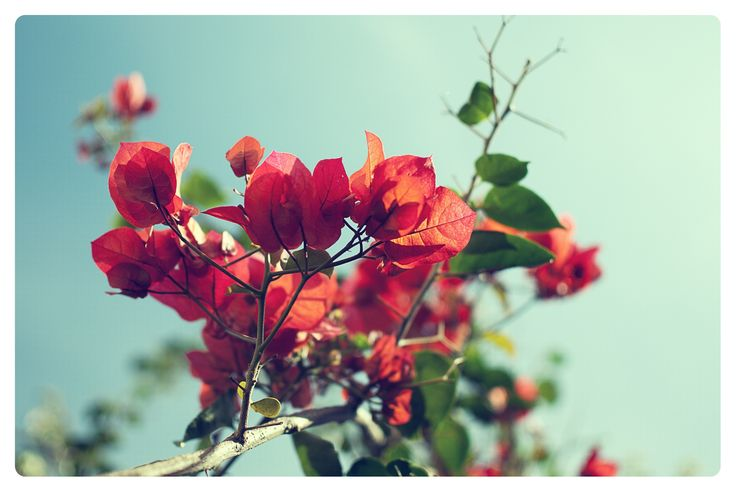 Seasonal Colors_28 by Pedro Pinho on 500px