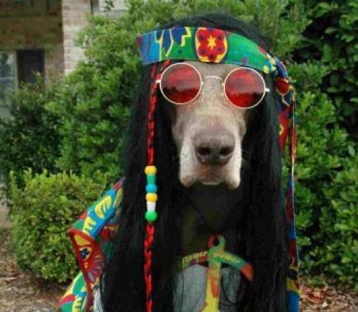 PetsLady's Pick: Funny Hippie Dog Of The Day  ... see more at PetsLady.com ... The FUN site for Animal Lovers