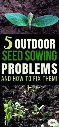 Vegetable Gardening for Beginners: Learn about the top 5 problems faced by gardeners when it comes to planting seeds directly into the garden. | Organic Gardening | Gardening Tips #organicvegetablegardening