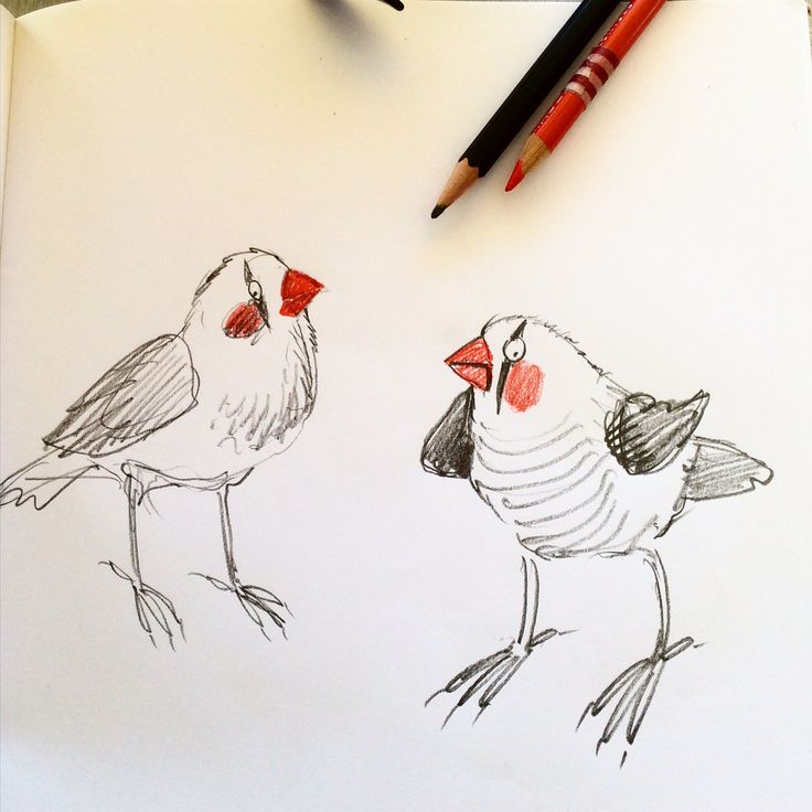 ..when I started to find that the finches I was drawing with red beaks and cheeks looked a lot like clowns... #leonarddoesntdance #birds #finches