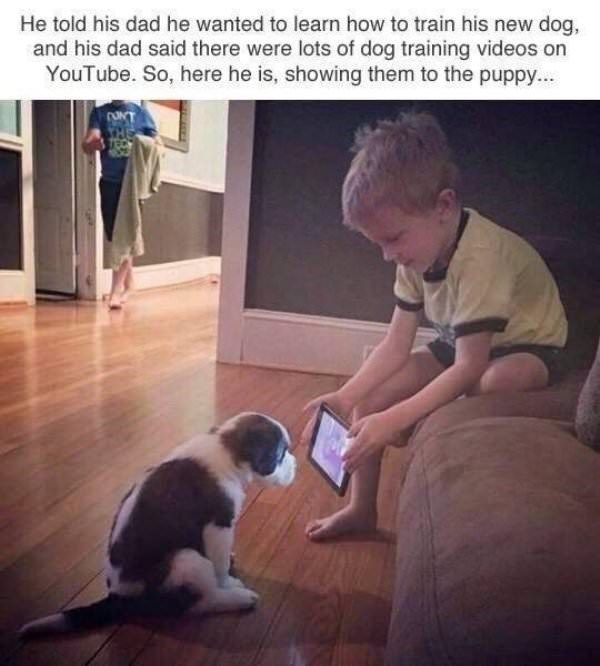 40 Wholesome Memes And Posts For When You Need Cheering Up Funny Animal Memes Dog Training Videos Puppy Training