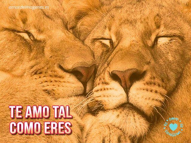 lindos leones acurrucados