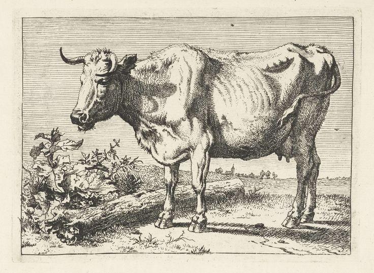Paulus Potter | Koe met gedraaide hoorn, Paulus Potter, 1650 |