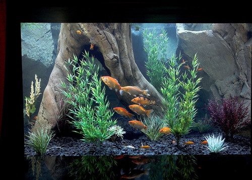 Aquariums Design, Pictures, Remodel, Decor And Ideas   Page 14