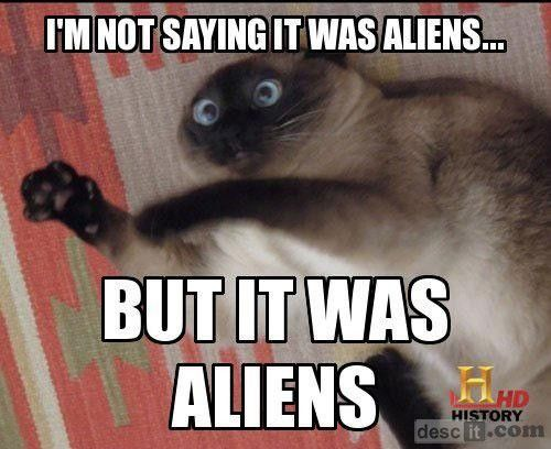 ancient aliens: Cats, Funny Cat, Funny Pictures, Ancient Aliens, History Channel, Funny Animal, Cat Faces, Cat Memes, Funnie