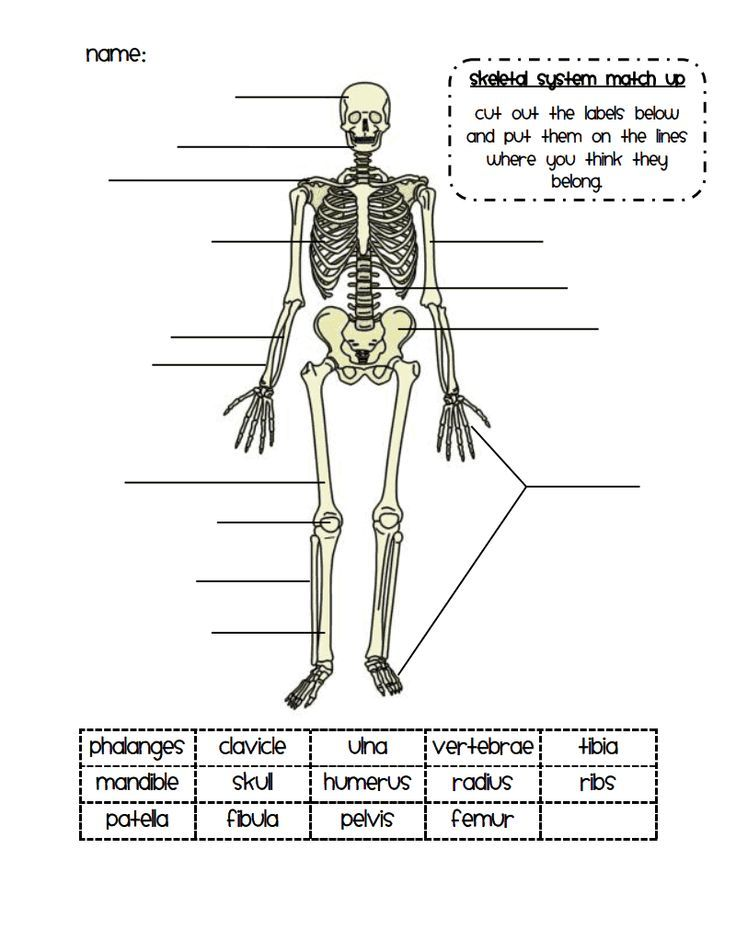 25 best ideas about skeletal system on pinterest skeletal system activities body bones and. Black Bedroom Furniture Sets. Home Design Ideas