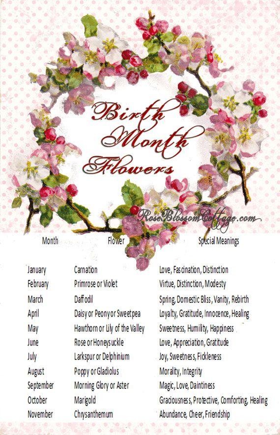 Birth Month Flowers Combined: Birth Flowers And Meanings