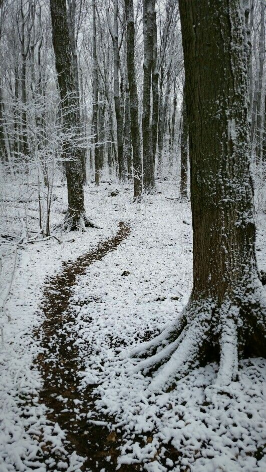 Bruce Trail at Petun Conservation Area - Grey County