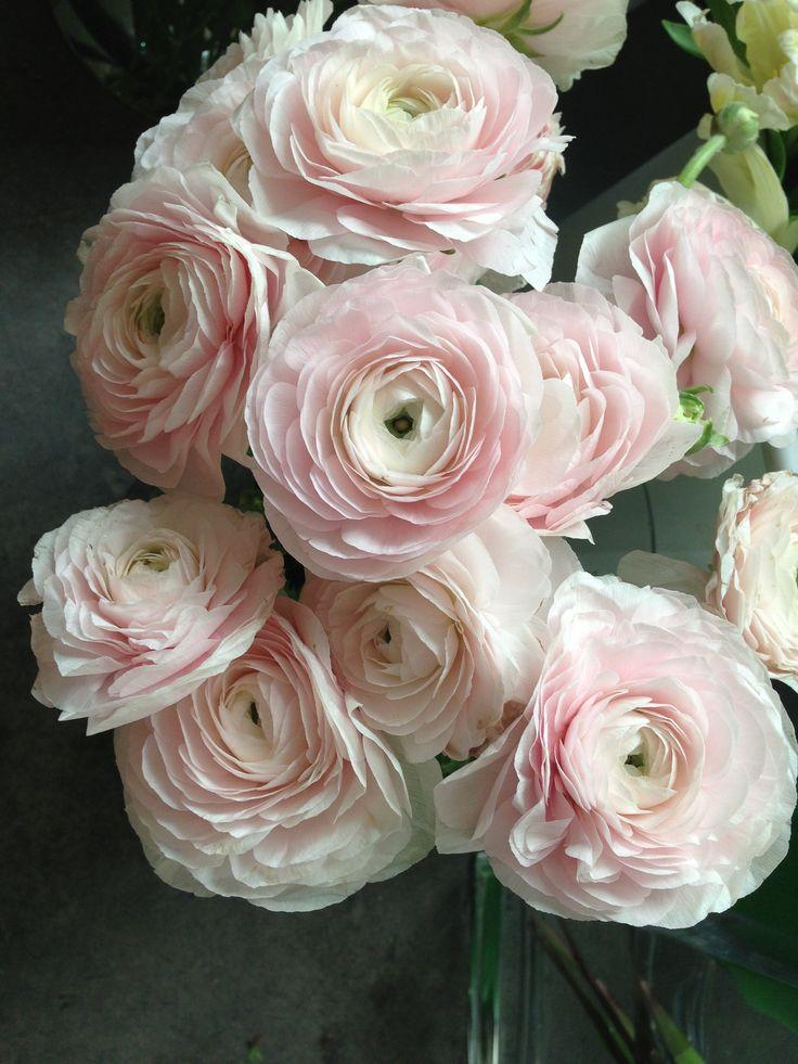 flower idea: blush ranunculus                                                                                                                                                     More