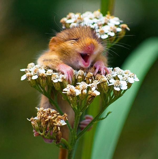 The Happiest Animals In The World that Will Definetly make you Laugh