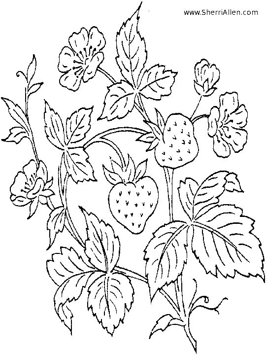 Nice Strawberry Plant Coloring Pages Pattern - Professional Resume ...