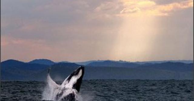 Intram in apa! 20 de fotografii cu lumea submarina!