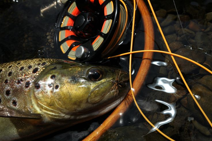 Otways brown trout. They love the Deer Hair Emerger.