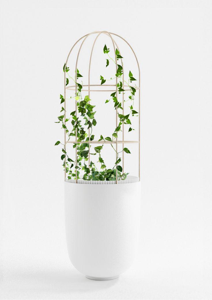 porcelaine_pot-N°1-treille-plantes.jpg (1654×2339)
