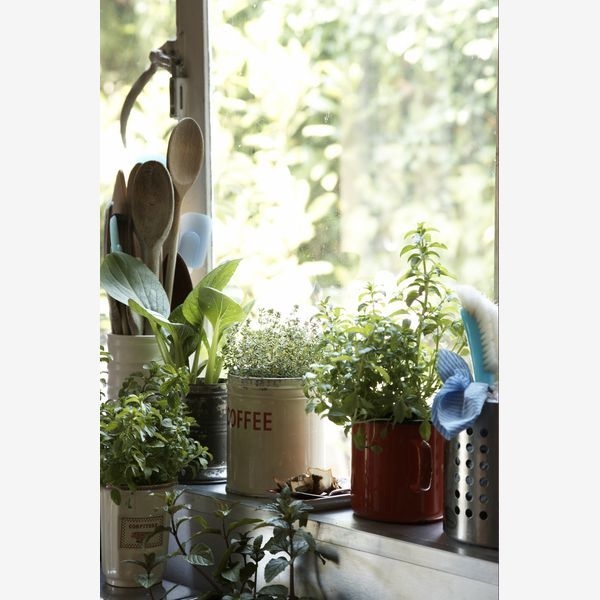 Indoor herb gardens are easy to do and not very demanding to tend.  Using different types of containers makes it even more interesting, along with the smells, flavors, textures, and fun.