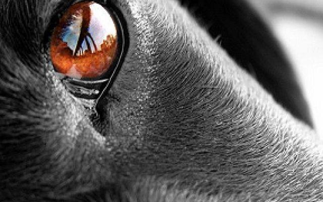 """I nostri amici animali: immagini e aforismi dedicati a loro! Dedicato al regno animale: cani, gatti ed altri amici che ci tengono compagnia immortalati in splendide immagini con aforismi e citazioni. """"Non esiste patto che non sia stato spezzato o fedeltà che  #animali #immagini #aforismi"""