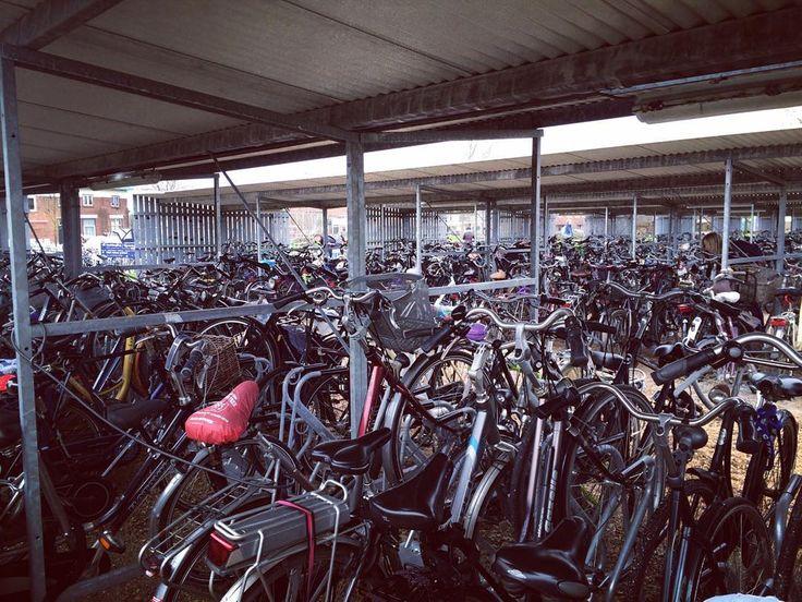 Hands up to those who know the struggle: finding your bike #Stenden #stendenuniversity #stendenstudentcity #students #bikes #leeuwarden #lwd #studyabroad #studyinholland #holland #nederland #netherlands by stenden