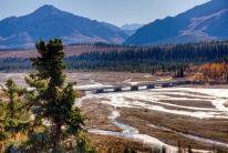 Denali National Park | Best Wildlife Viewing Spots