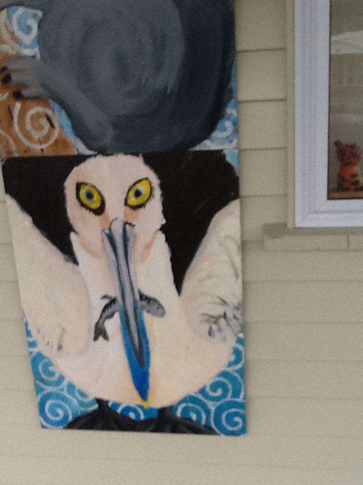 Cville Albatross