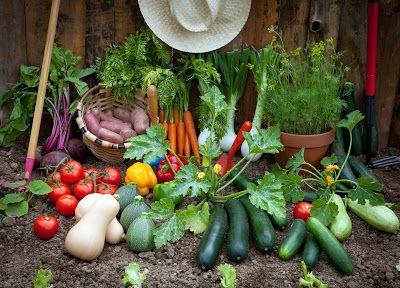 Monash University Low FODMAP Diet: Eating more vegetables on a Low FODMAP Diet
