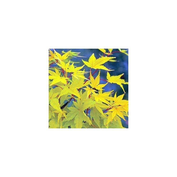 7 best Steingarten images on Pinterest Decks, Gardens and