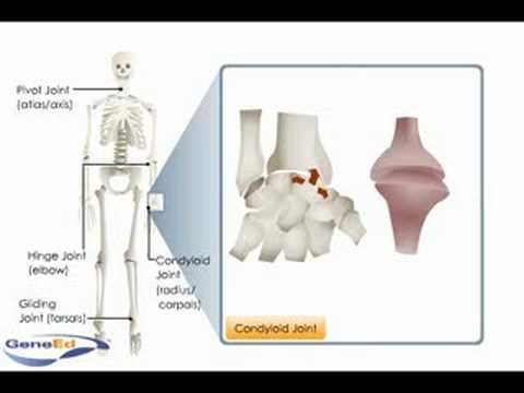 Types of Synovial Joints - YouTube  https://www.youtube.com/watch?v=zWo9-3GJpr8
