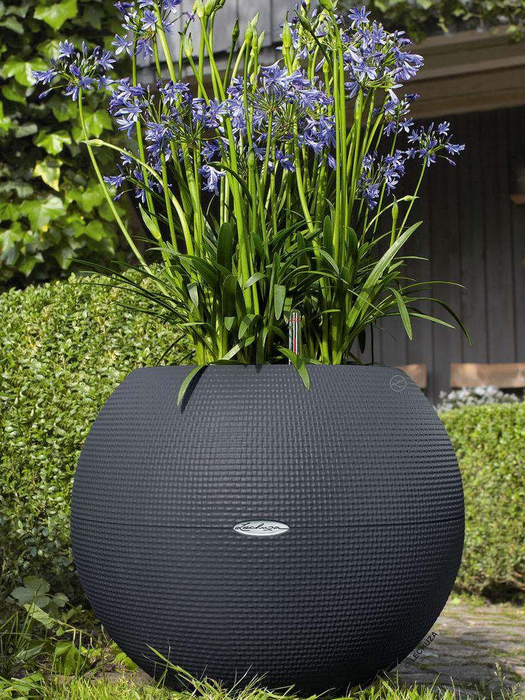 Large Sphere Planter: Puro 50 Self-Watering Pot   Gardeners.com