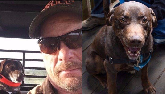 Steve Austin's beloved Hershey The Wonder Dog has passed away