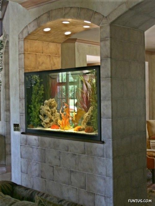 Aquarium in the wall