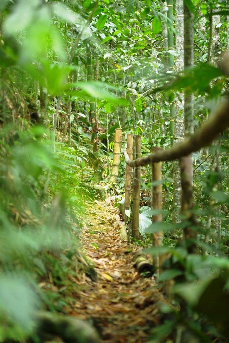 Sendero ecológico de PANACA