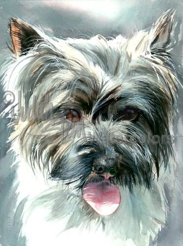 """The dog who played """"Toto"""" in the film The Wizard of Oz, was a Cairn Terrier. Description from etsy.com. I searched for this on bing.com/images"""