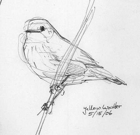 Best 25+ Bird drawings ideas on Pinterest | Simple bird drawing ...