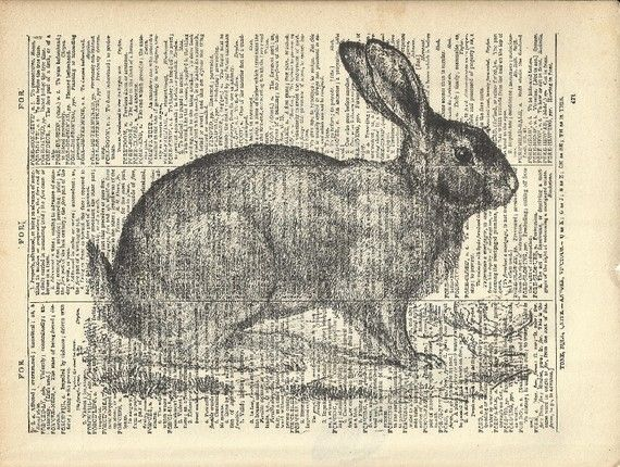 rabbit hole essay Reaching down the rabbit hole: extraordinary journeys into the human brain   but it doesn't come across as such to me although it's not exactly an essay in.