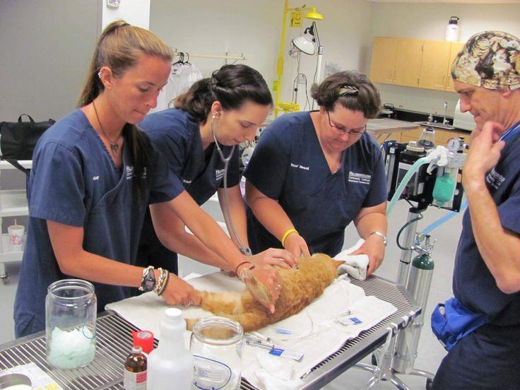 ... vet tech students Megan Joiner, left, | Veterinary Professionals Rock
