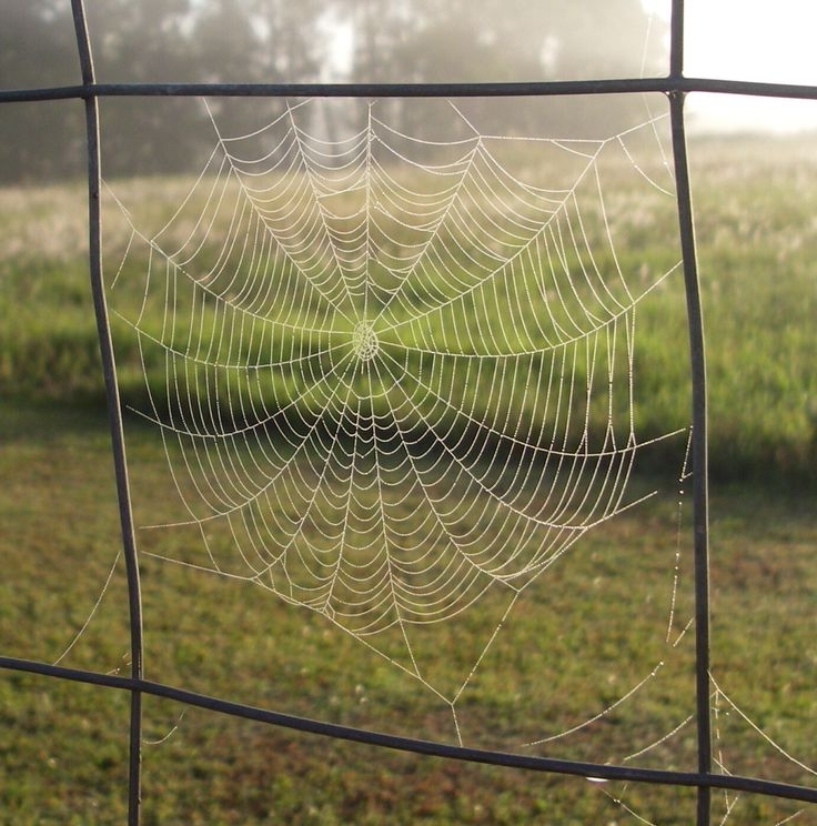 Web with the morning drew.