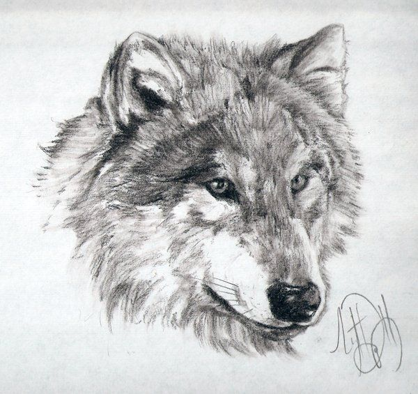 Drawings Of Wolves: 50-Minute Wolf Charcoal Sketch