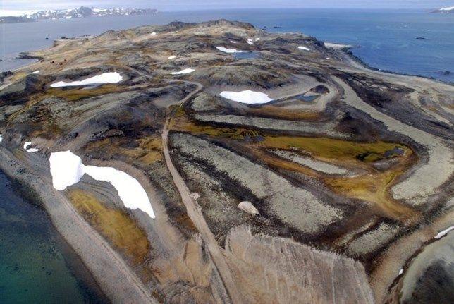 El vulcanismo diezma hace 7.000 años una gran colonia de pingüinos